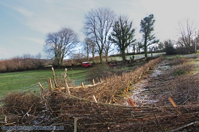 breconshore-hedging-brecon-