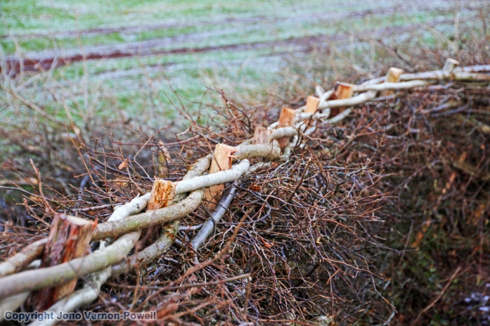hazel-whips-breconshire-hed