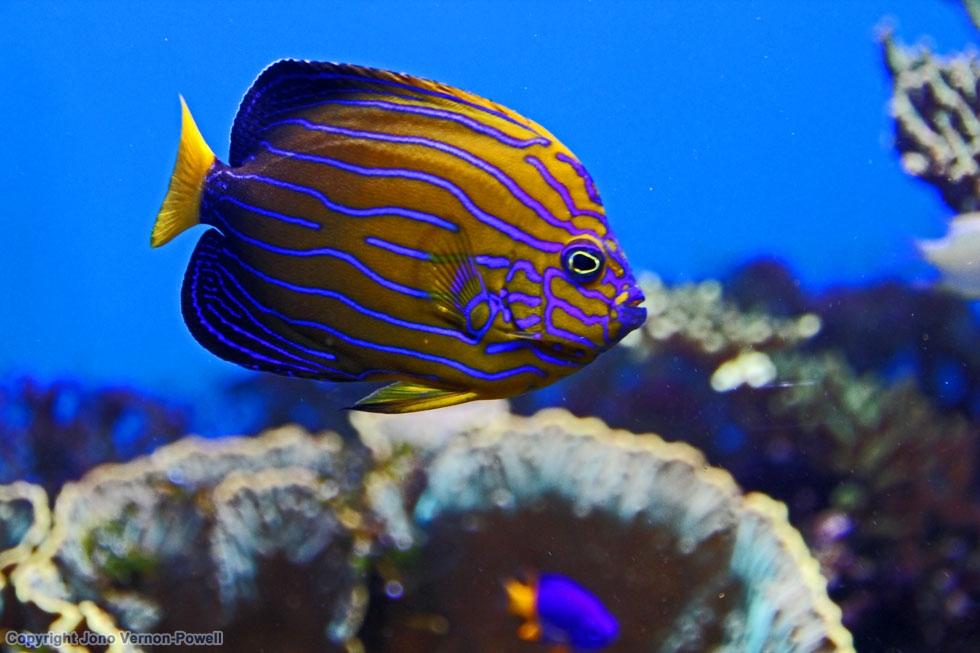 Great Barrier Reef – On Knife Edge (07.06.15) » jonovernon ...