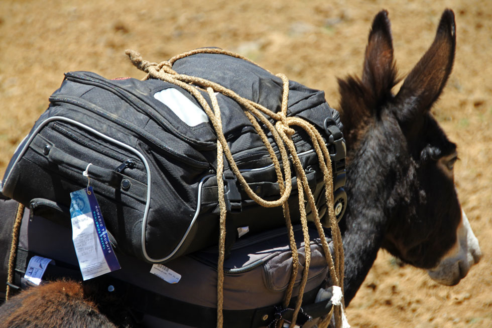 Nomadic Thoughts trekking donkey