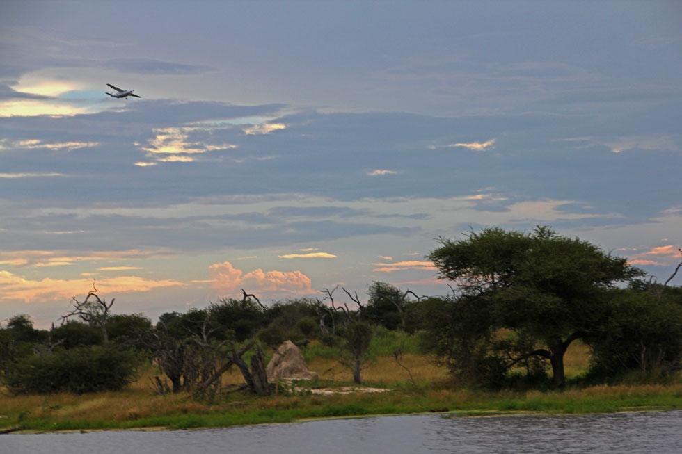 flying-above-bush-copyright