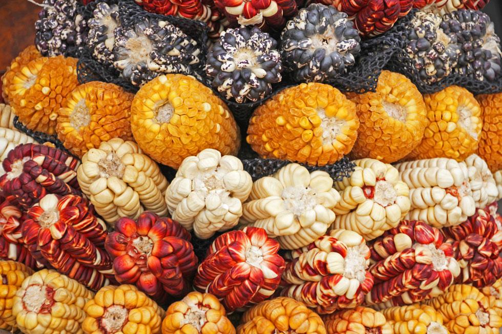 south-american-market-corns