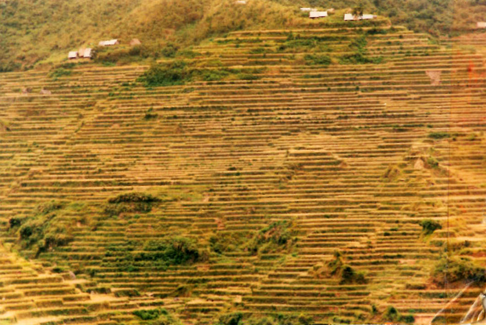 luzon-rice-terracing-strips