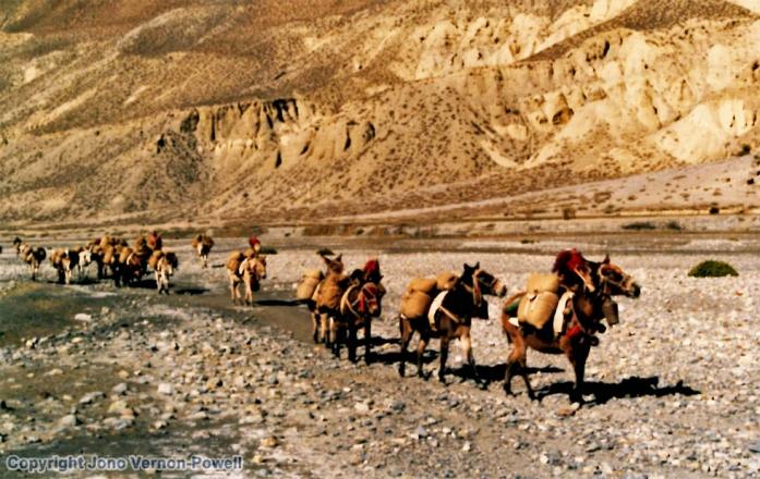 Trading caravans en route to Tibet