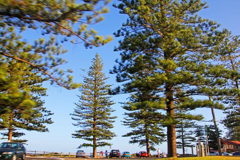 norther-beach-trees-copyrig