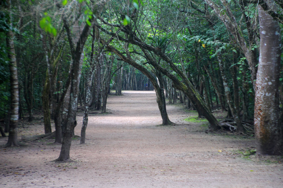 coba-walkway-copyright-jono