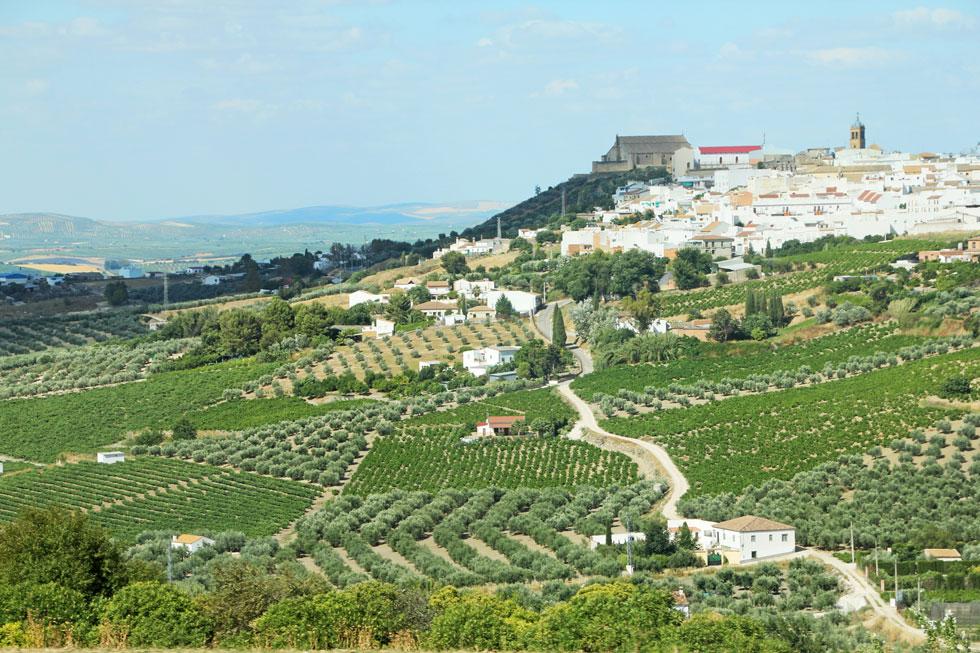 olive-groves-adalucia-copyr